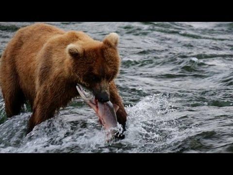 Alaska – Uncharted Waters – Canon 5D Mark III
