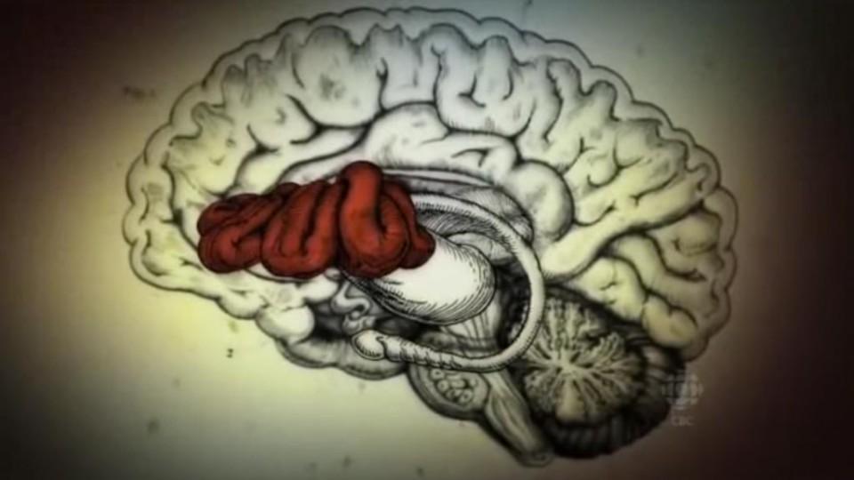 Ayahuasca & The Brain