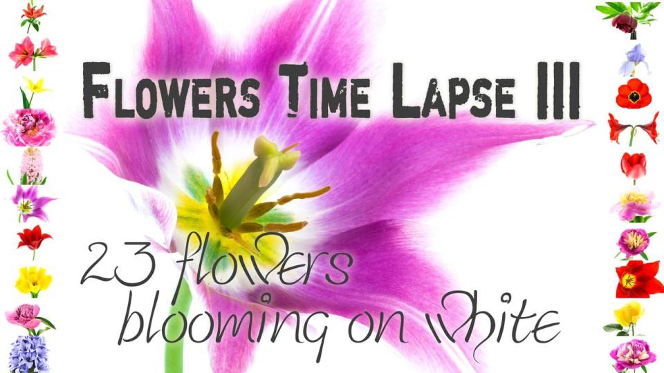 Flowers Timelapse