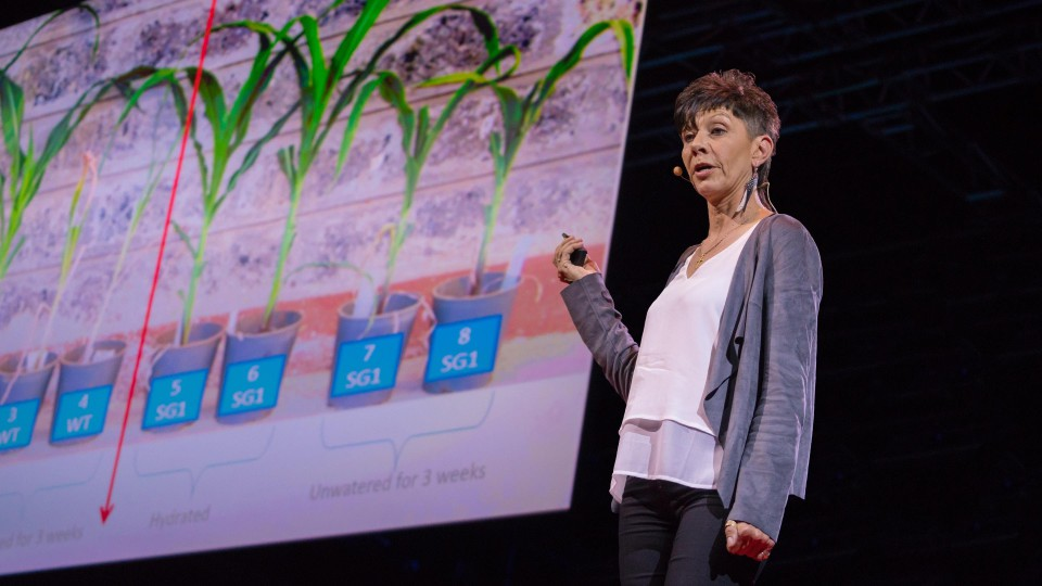How we can make crops survive without water