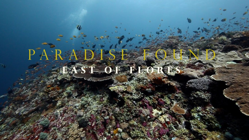 Paradise Found : East of Flores