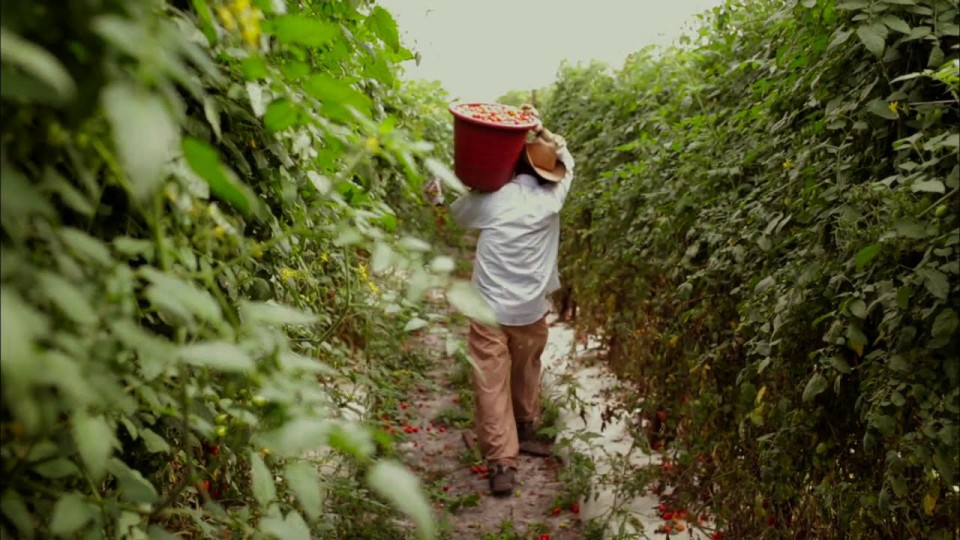 Why Today's Agricultural Economy is Good for Foodies, but Bad for Farm Workers, with Eric Schlosser