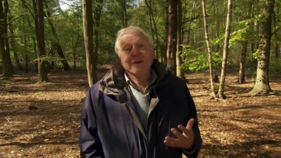 David Attenborough Origin of Life, Arrival HD BBC Documentary Animals & Nature