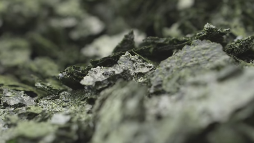 How Algae Could Change The Fossil Fuel Industry