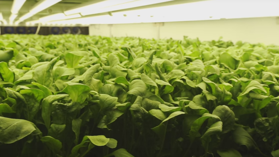 This Farm of the Future Uses No Soil and 95% Less Water